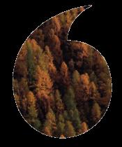 QUOT-TREE-V2